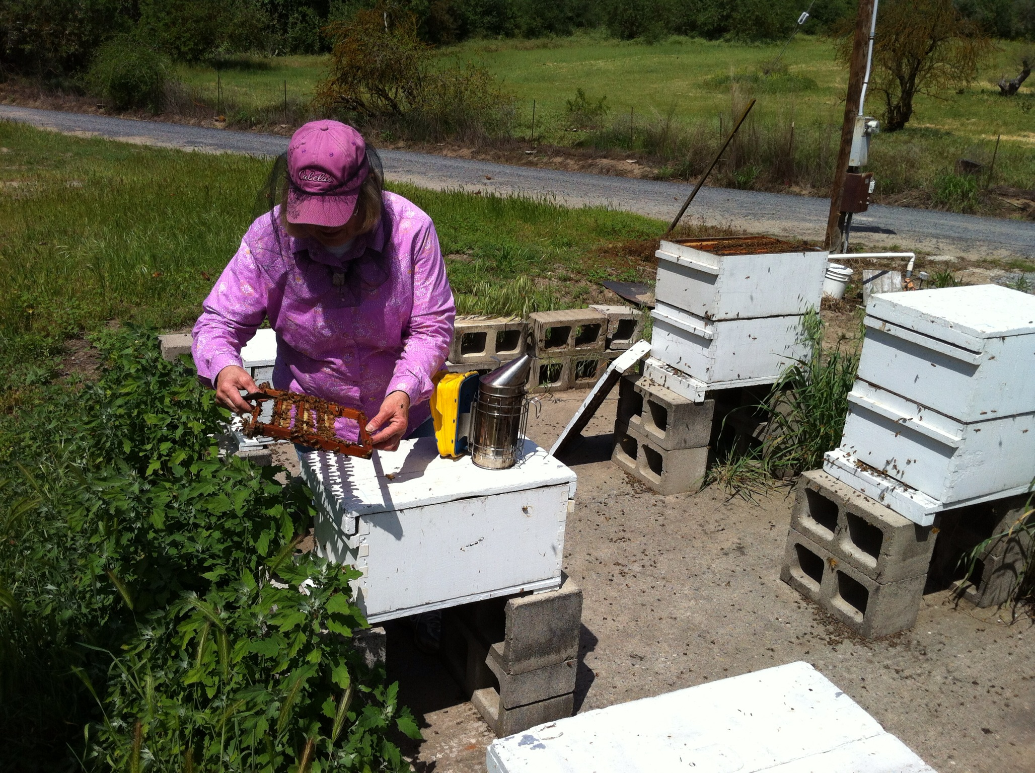 Lucille Hoffman inspects a frame for queen bees.