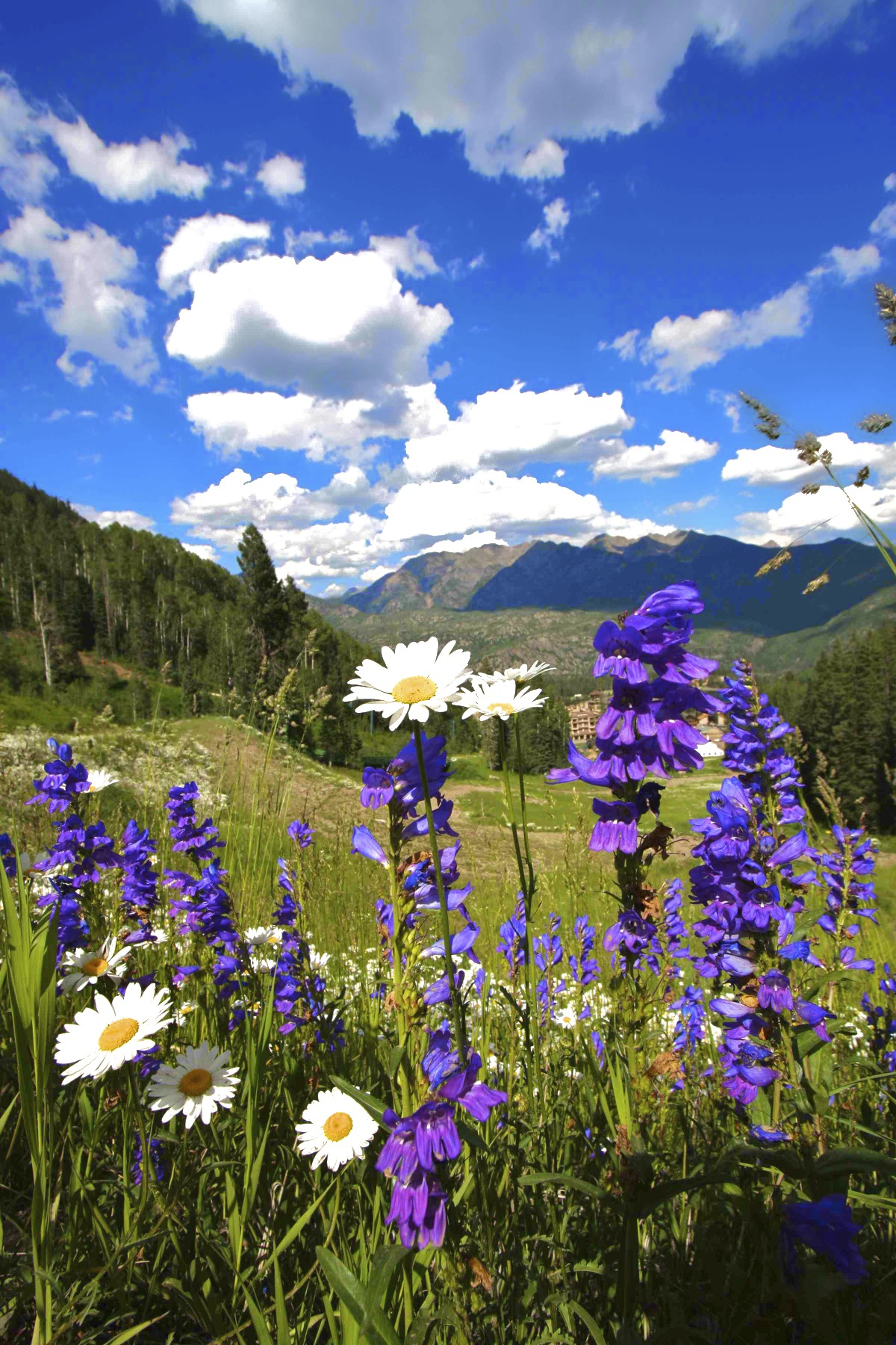 Spend summer in Durango, Colorado.