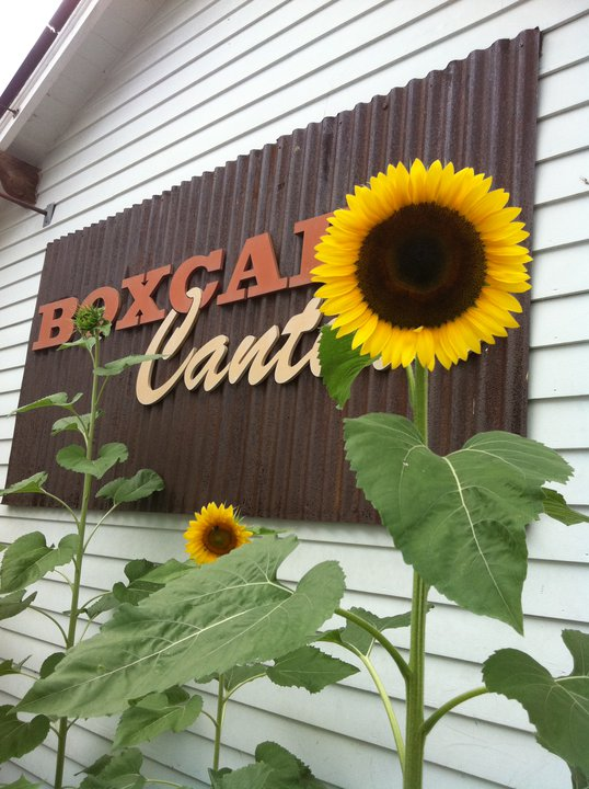 Boxcar Cantina Greenwich CT Sunflowers