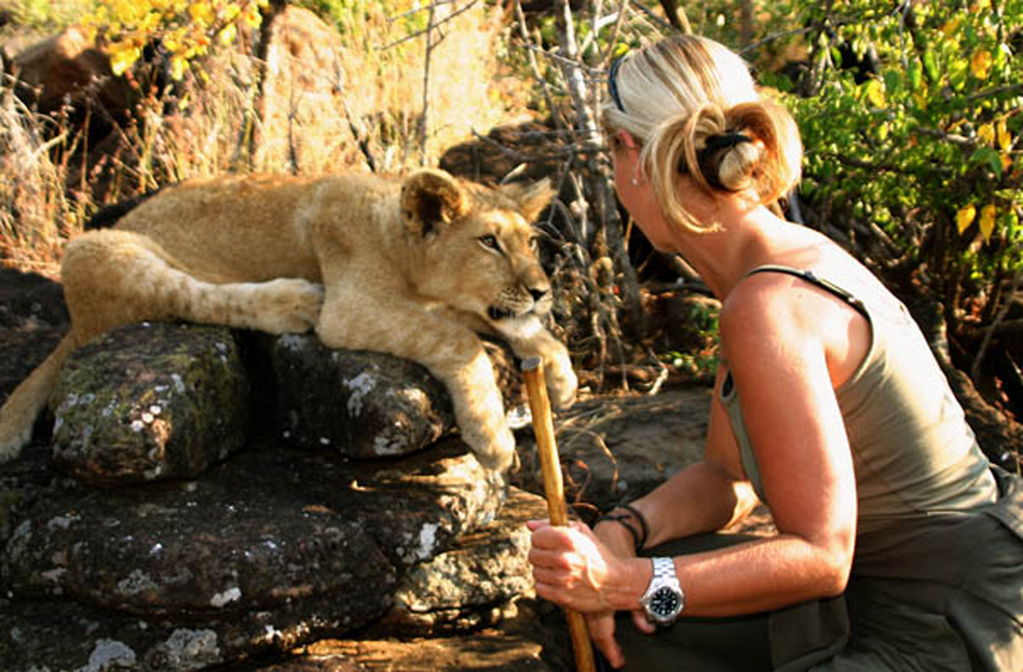Up close and personal with the lions. Photo credit: Kaya Responsible Travel