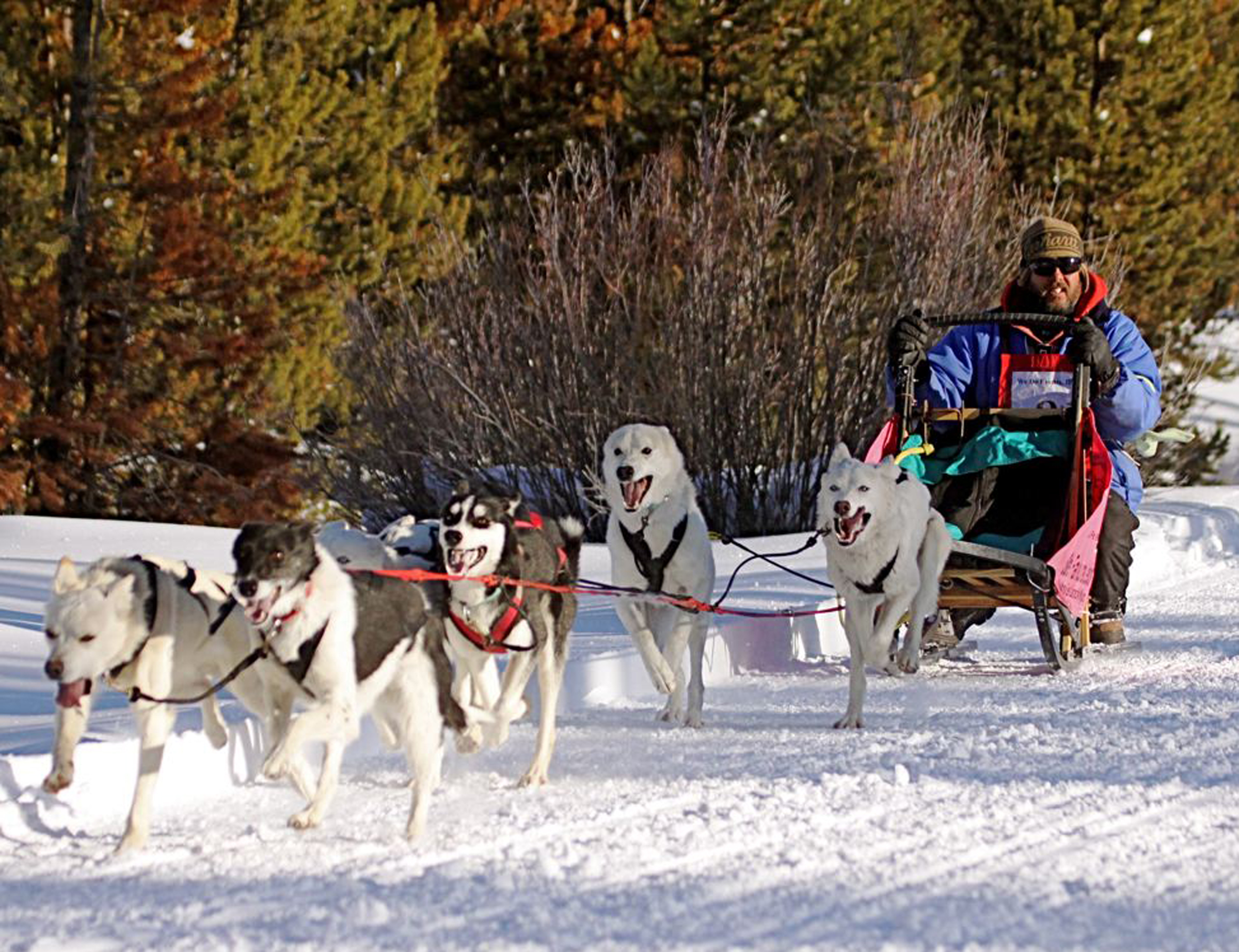 Watch the sled dog races during the Dubois Winterfest February 3-5.