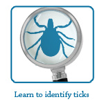 Learn how to identify and avoid tick habitats. www.insectshield.com/work