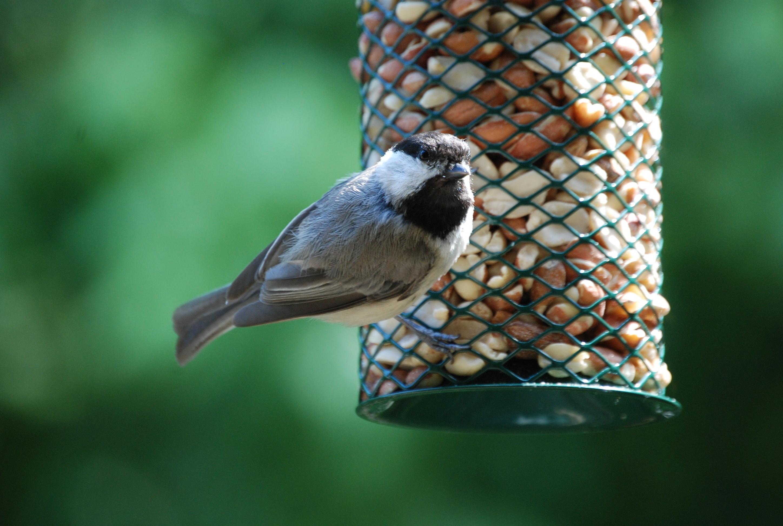 february is national bird feeding month