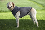 Insect Shield Dog Tee's