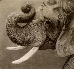Elephant Drawing (by Whitney Schuck)