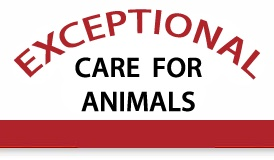 Exceptional Care for Animals Madison