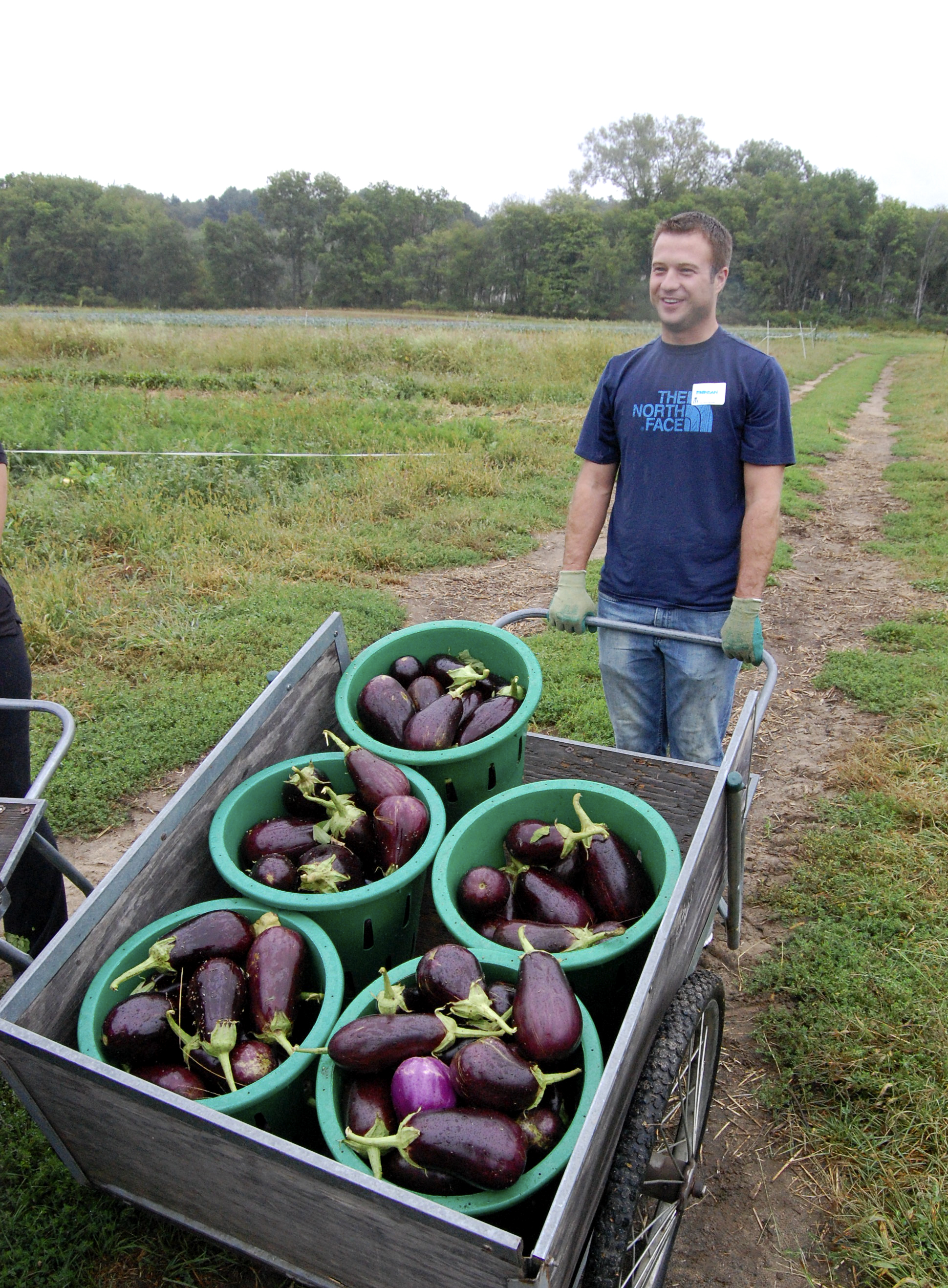 Brendan Griffin, City Table & City Bar Manager, works the fields in Lincoln, MA for The Food Project