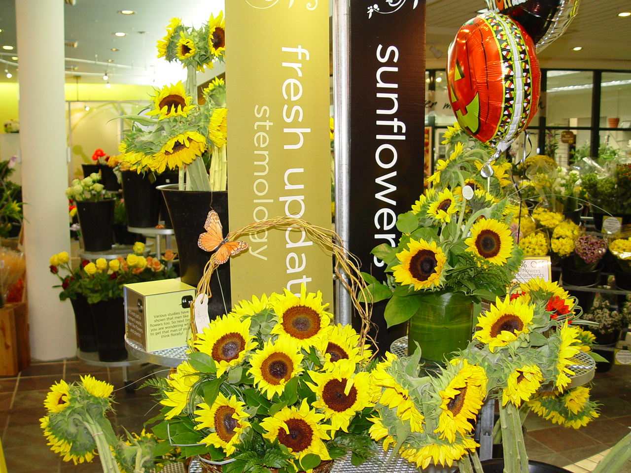 Celebrating with Sunflowers at Field of Flowers