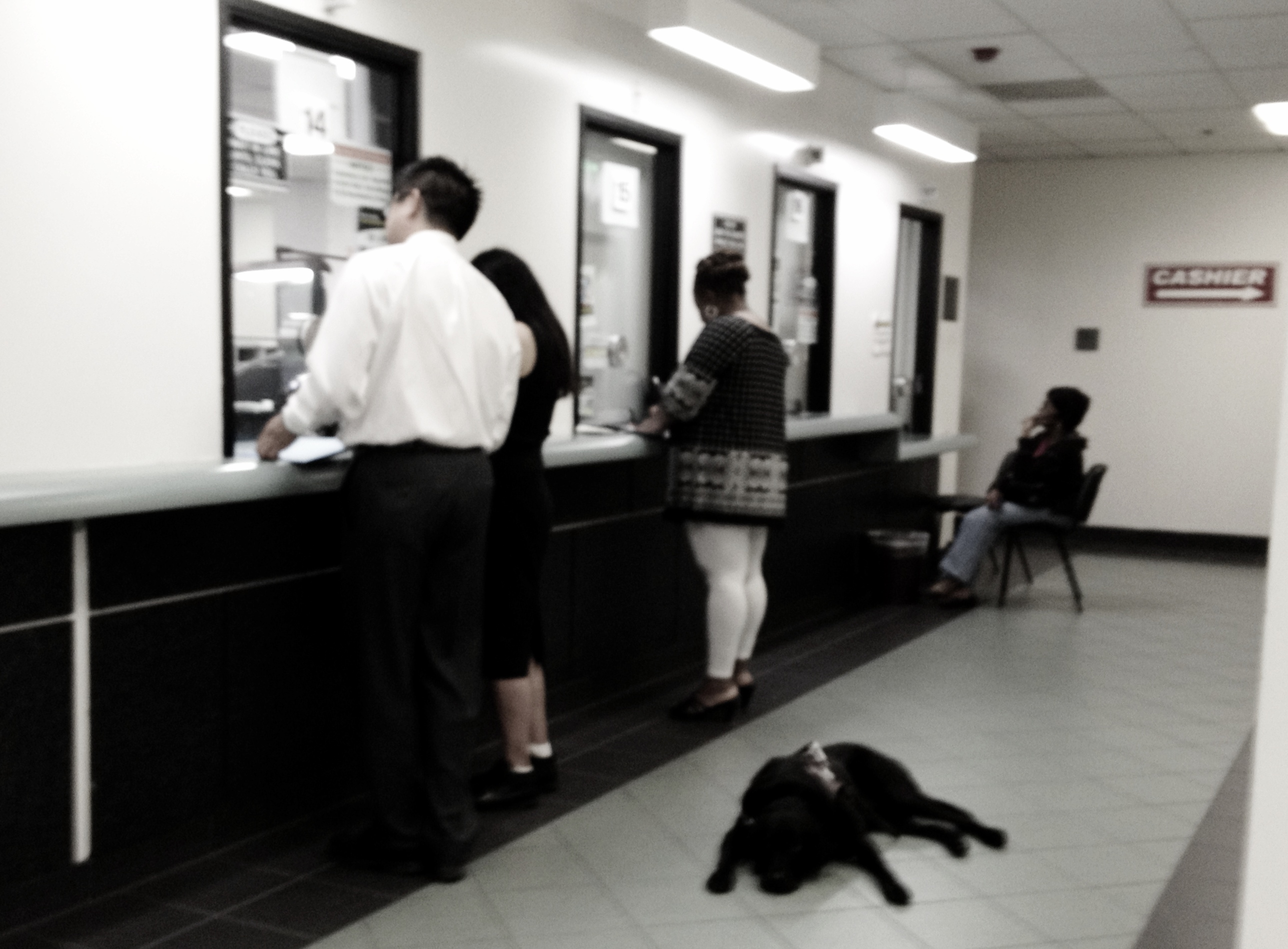 An image taken by our founder while in line at the Los Angeles County Recorder's office to get the LDA license renewed.