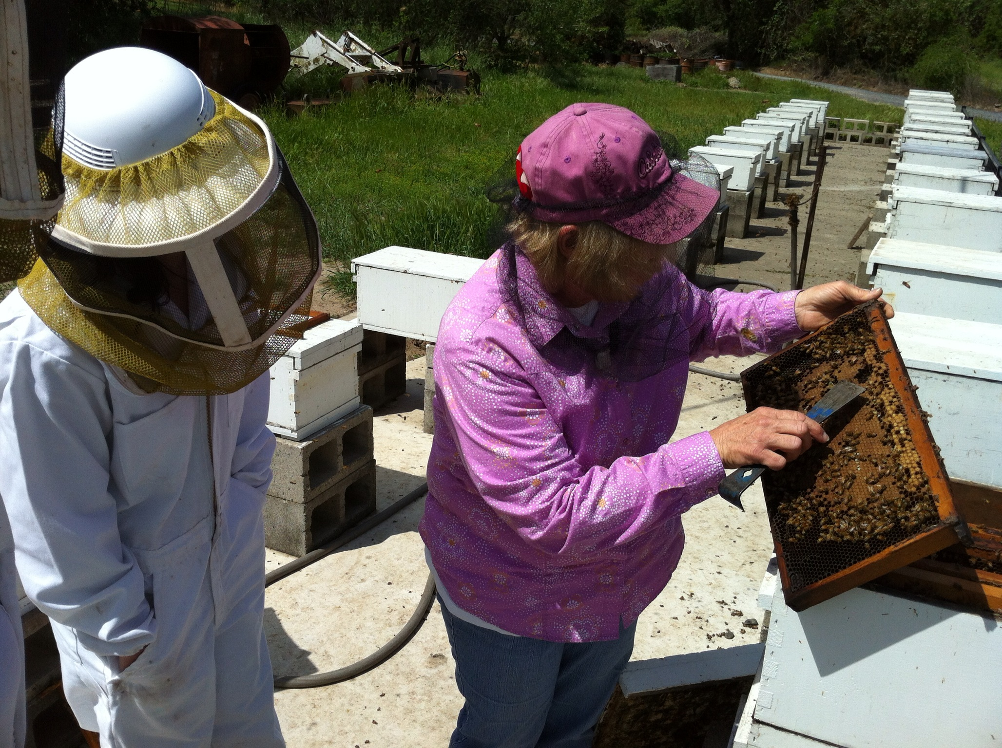 Lucille Hoffman (right) showing Cynthia Guerrero (left) emerging bees