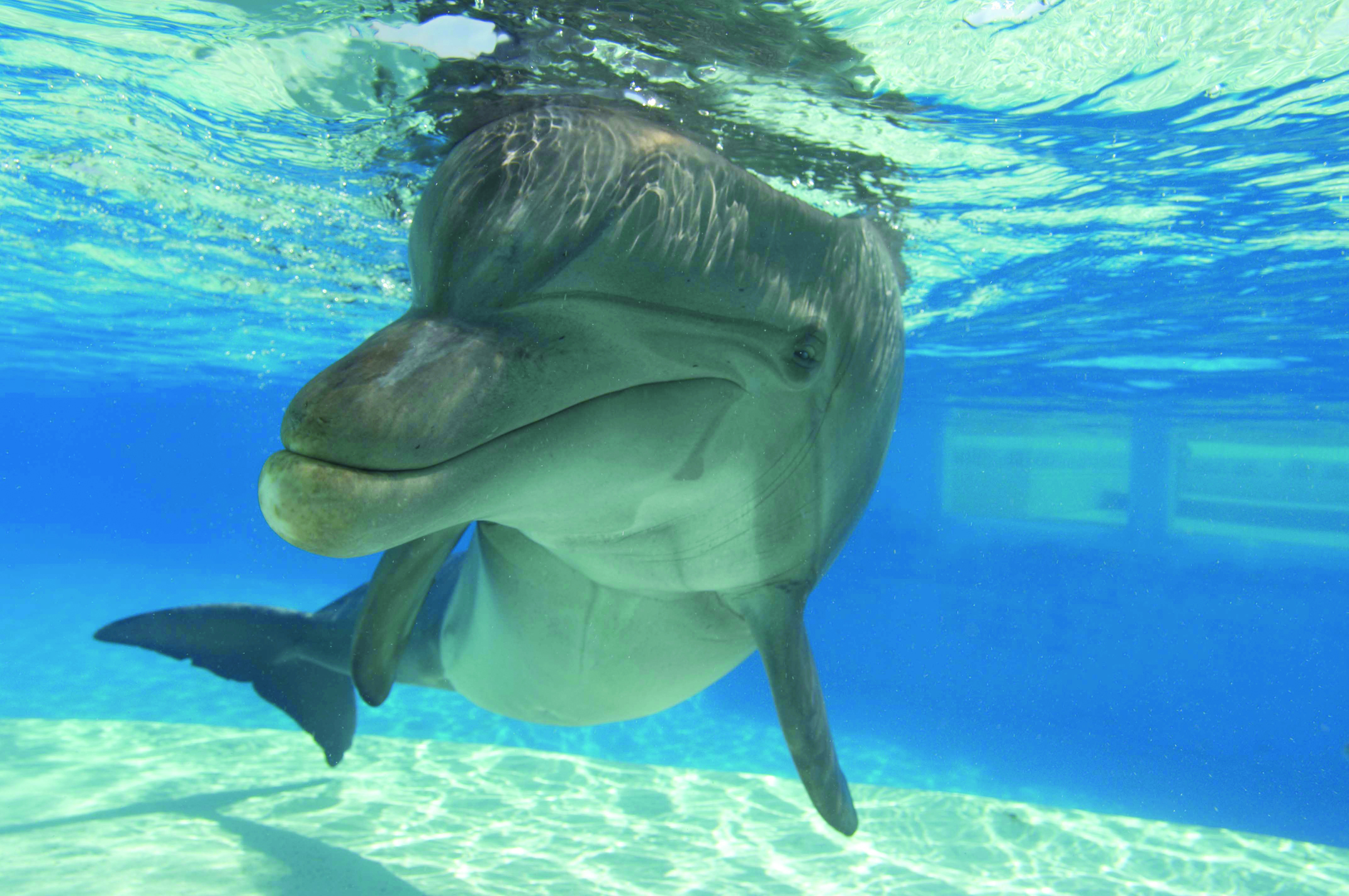 Viva Florida 500 guides visitors to theme parks and other ...