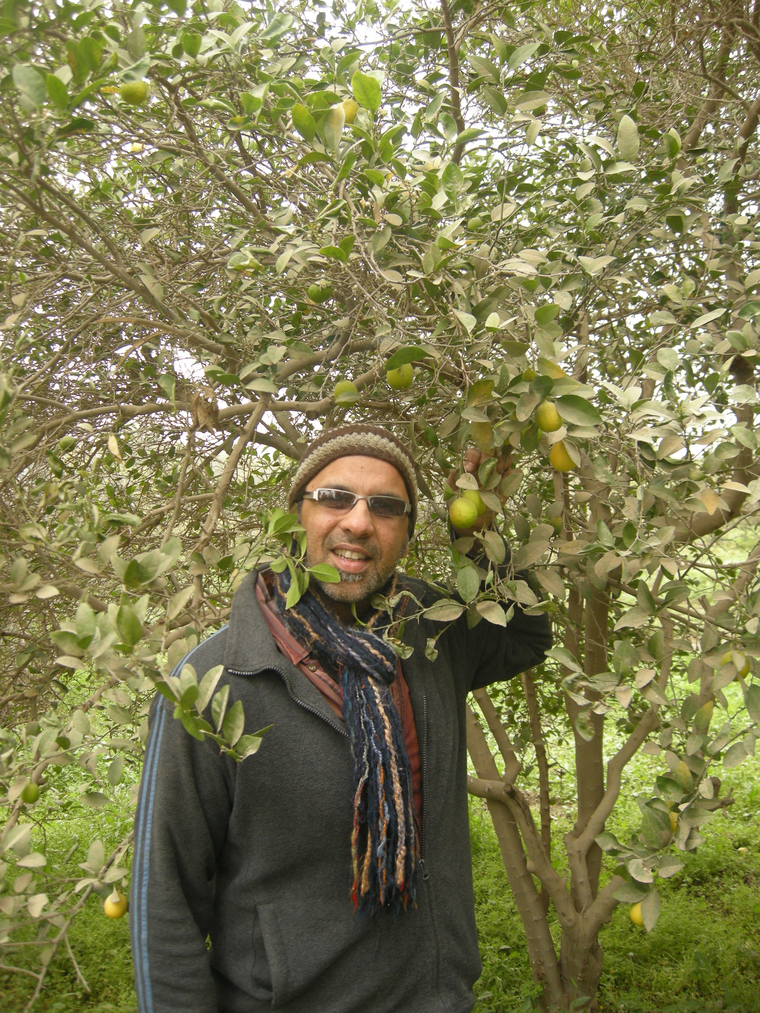 Numi Co-Founder, CEO and Alchemist Ahmed Rahim with a Dried Desert Lime Tree