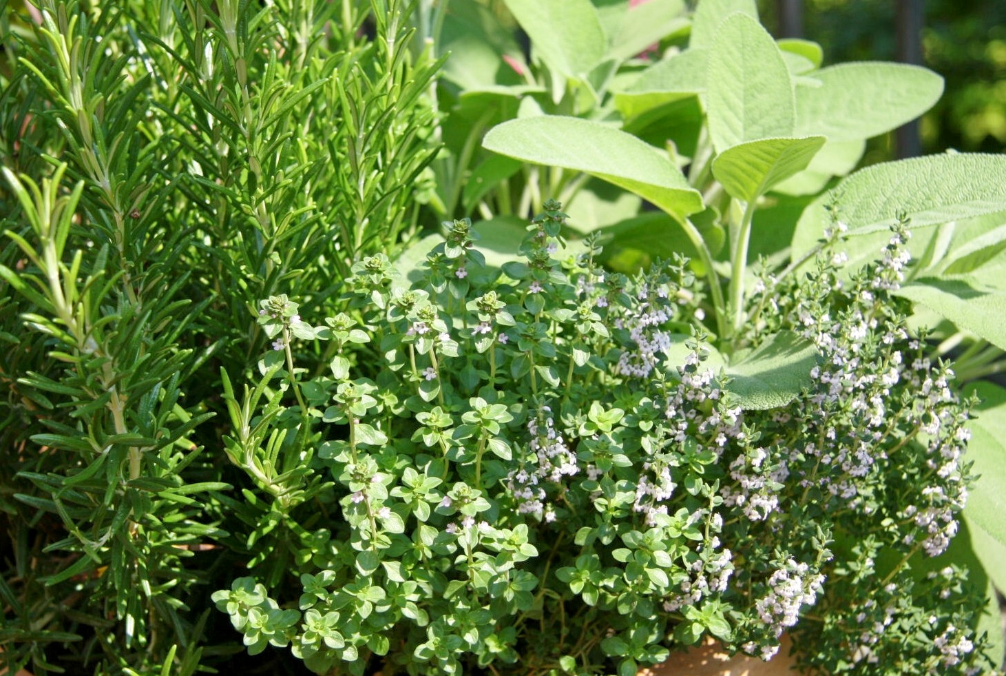 Tour beautiful herb gardens like this one at The 1785 Inn.