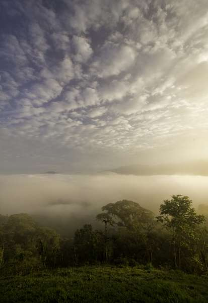 Help conservation efforts in the Cloud Forest. Photo credit: Work Abroad