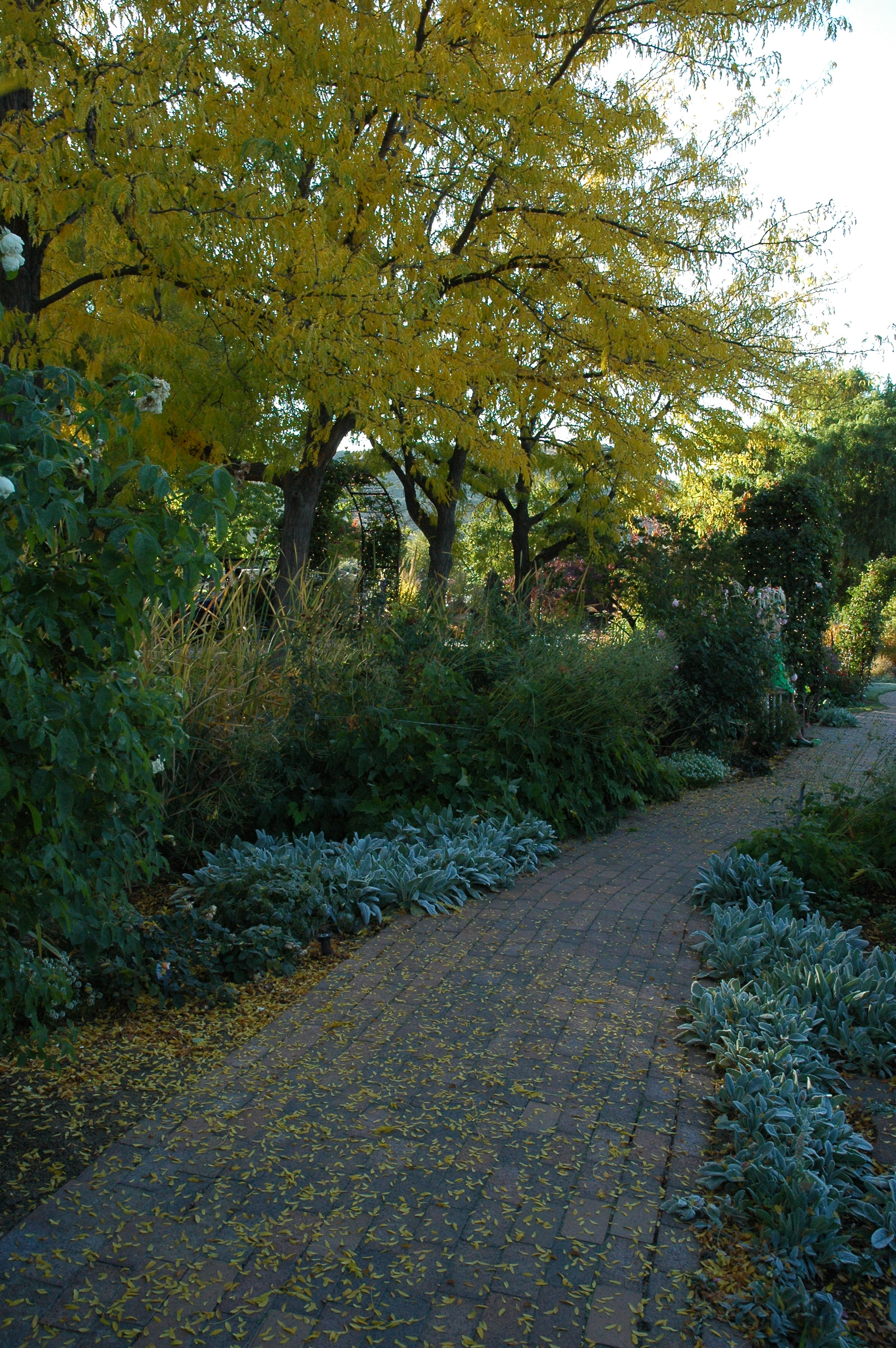 Pathway at the Idaho Botanical Garden
